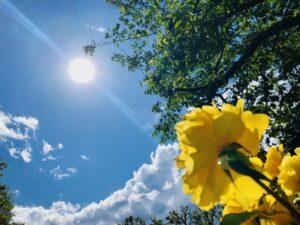 真夏の体質改善
